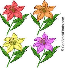 giglio, fiore, set