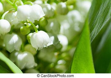 giglio, fiori, valle, closeup