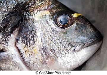 gilt head bream close up image