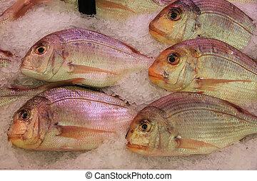 Gilt-head bream - Fresh gilt-head bream at a fish market