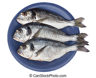 gilt head (dorada) on blue plate isolated on white...