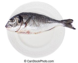 gilt head (dorada) on white plate isolated on white...