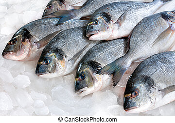 Gilthead (Sparus aurata) on ice at the seafood booth