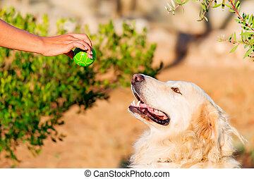 white dog waiting for the ball