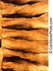ginger animal fur texture