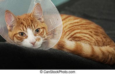 Ginger cat after medical treatment