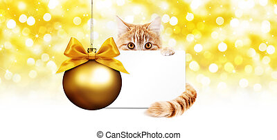 ginger cat and gift card with golden christmas ball Isolated on bright lights