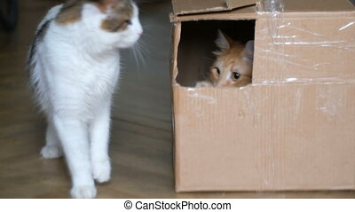 ginger cat in a box playing with a white cat