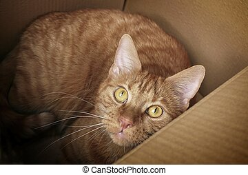 Ginger cat in a cardboard box looking curious to the camera.