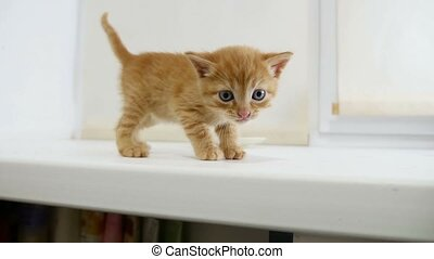 ginger cat kitten walking on the windowsill in the house -...