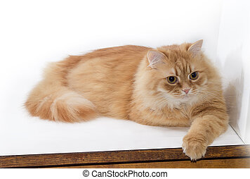Ginger cat lies on light surface in a calm state