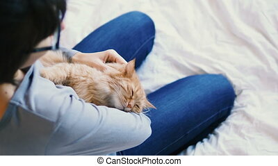 Ginger cat lies on woman's hands. The fluffy pet comfortably...