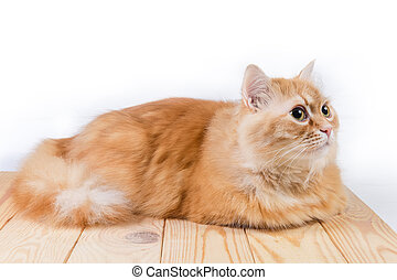 Ginger cat lies on wooden surface and looking forward