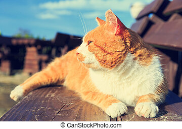 Ginger cat lying on a bench