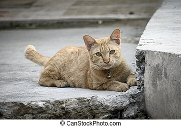 Ginger cat lying on the concrete floor.,Close-up of a ginger cat.