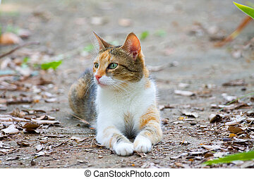 ginger cat lying on the ground