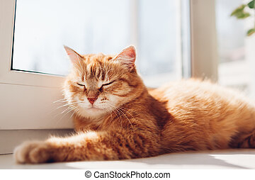 Ginger cat lying on window sill at home in the morning. Pet enjoying sun