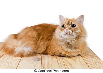 Ginger cat lying on wooden surface and looking up