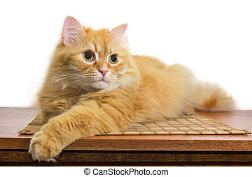 Ginger cat lying on wooden surface on a white background