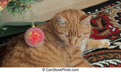 ginger cat lying under our Christmas tree