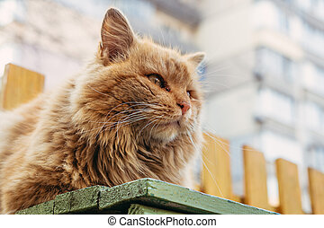 Ginger cat. Red homeless cat sits on a bench on the street.