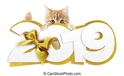 ginger cat showing happy new year 2019 text with golden ribbon bow isolated on white background, christmas signboard or gift card for pet shop or vet clinic