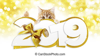 ginger cat showing happy new year 2019 text with golden ribbon bow on blurred gold christmas lights, signboard or gift card for pet shop or vet clinic
