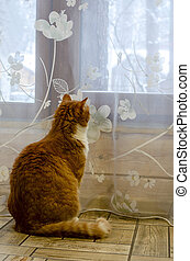ginger cat sits near the window in a country house