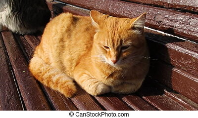 Ginger cat sits on a wooden canopy outside on a sunny day -...
