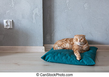 ginger cat sittin on pillow on a floor