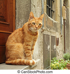 ginger cat sitting in front of tuscan house
