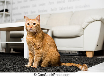 Ginger cat sitting