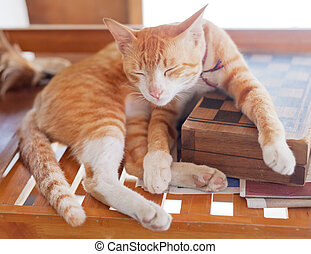ginger cat sleeping on a chessboard