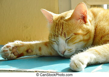 ginger cat sleeping on wooden cupboard in morning sunlight