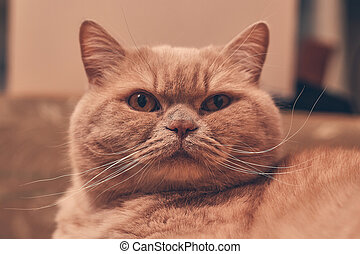 ginger cat stares in surprise. close up