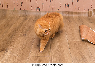 Ginger cat walking on the vinyl flooring  during its laying