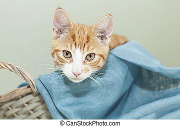 Ginger kitten in a basket