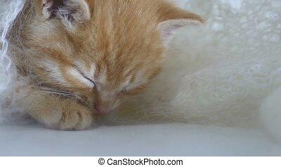 ginger kitten sleeps cat wrapped in white knitted scarf...