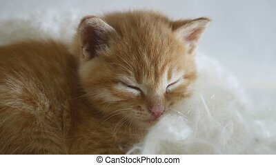 ginger kitten sleeps wrapped in white cat knitted scarf...
