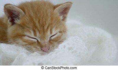 ginger kitten sleeps wrapped in white knitted cat scarf...