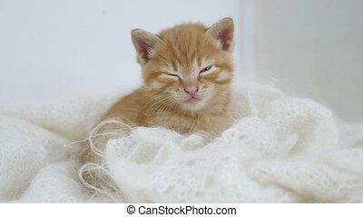 ginger kitten sleeps wrapped in white knitted scarf fluff...