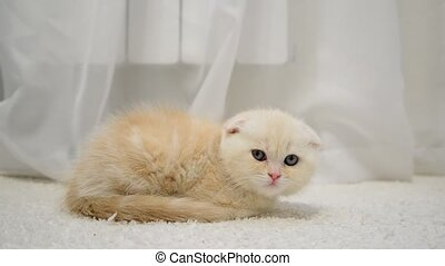 Ginger kitten slumber on carpet - Ginger kitten slumber on ...