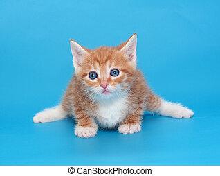 Ginger kitten with white spots