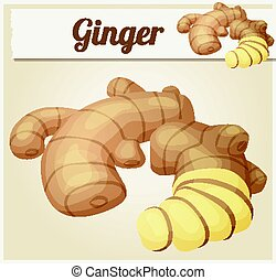 Ginger root illustration. Cartoon vector icon