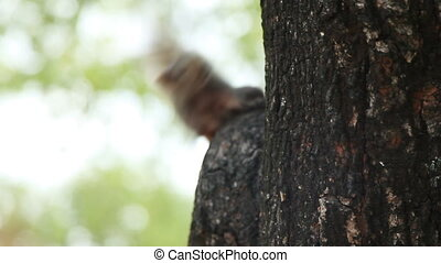 Ginger squirrel sits on a tree in park. Curious rodent...