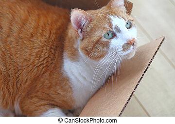 Ginger tabby in a cardboard box