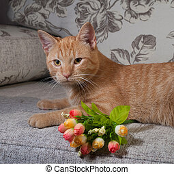 Ginger tabby kitten lying on couch with bouquet of flowers
