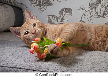Ginger tabby kitten lying on couch with bouquet