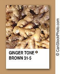GINGER TONE BROWN. Color sample design