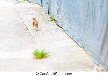 Ginger walking along a road